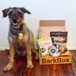 barkbox-ampsy